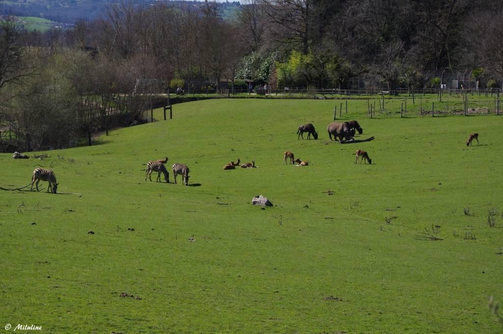 © Parc Zoo du Reynou