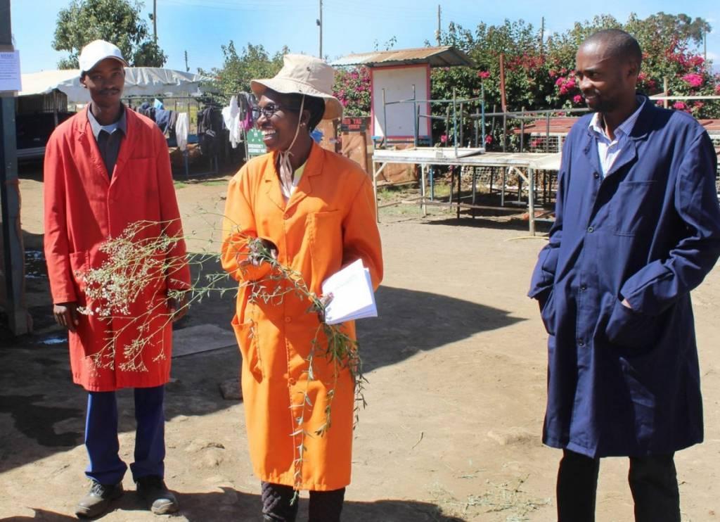 Exeo Capital a investi (via son véhicule Agri-Vie II) dans l'horticulteur kényan Marginpar Group en janvier 2018. - © Exeo Capital